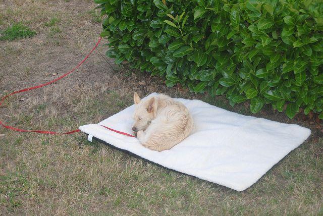 k-01_Emma müde von der Fahrt zur Bretagne