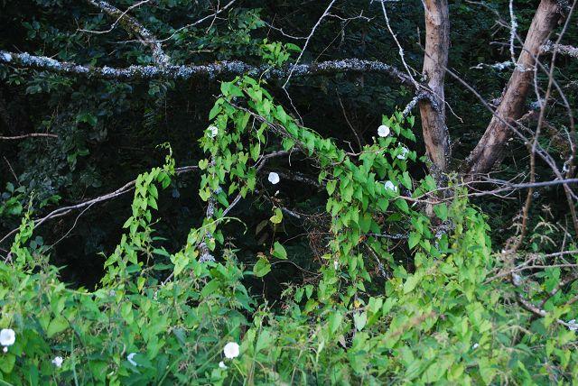 k-09_Pflanzen Canal