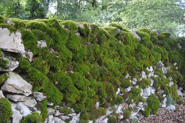 k-11_eine der moosigen Mauern