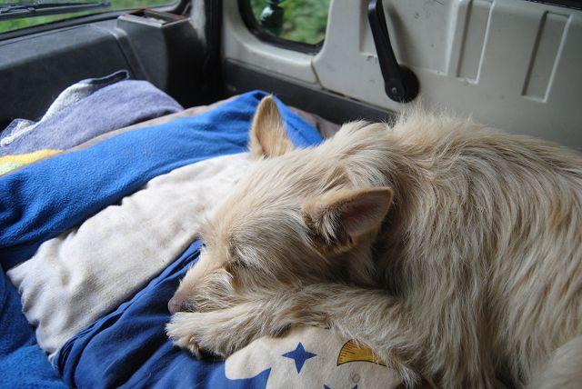 Nach einer Ortsbesichtigung ist Emma einfach nur noch müde